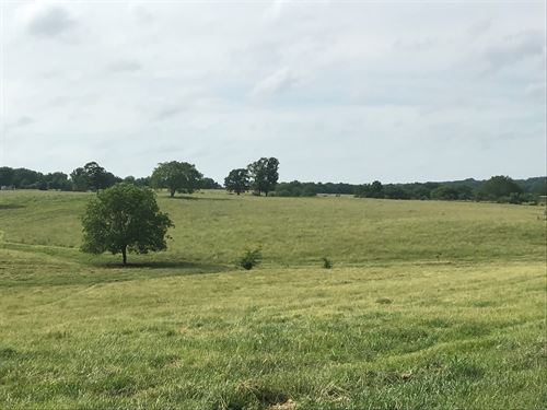 Cattle Pasture / Beautiful Building : Stockton : Cedar County : Missouri