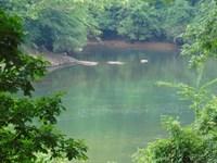 Mature Timber High Bank Large River : Juliette : Jones County : Georgia