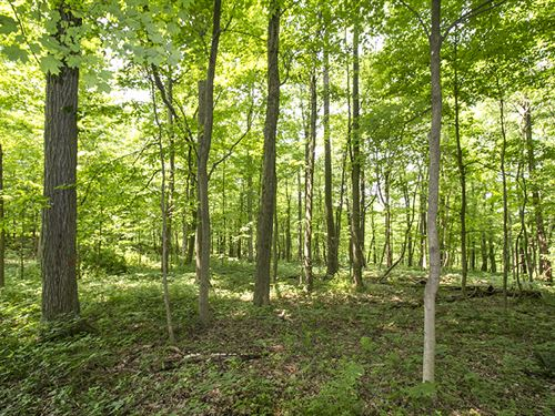 Tr 629, 20 Acres : Loudonville : Ashland County : Ohio