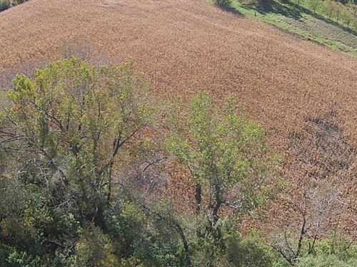 24 Acres, Prime Hilltop Land : Faribault : Rice County : Minnesota