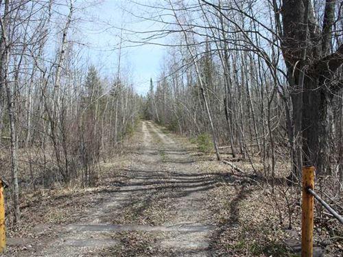 Beautiful 720 Acre Turnkey Hunting : Posen : Presque Isle County : Michigan
