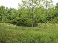 Eastern KY Wildlife Haven, 2341 : Vanceburg : Lewis County : Kentucky