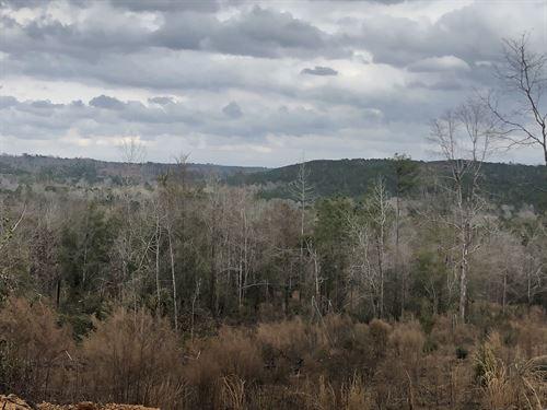 1247 Ac On Beautiful Mulberry Creek : Plantersville : Dallas County : Alabama