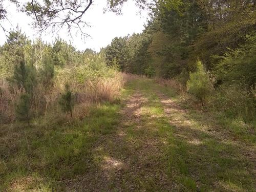 Hunting Land Joins Homochitto : McCall Creek : Franklin County : Mississippi