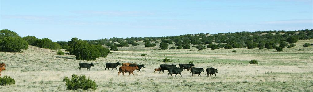 73 Acre Northern Az Ranch $258 Mo : Saint Johns : Apache County : Arizona