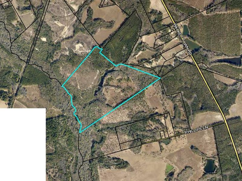 162.11 Acres Hunting / Investment : Lyons : Emanuel County : Georgia