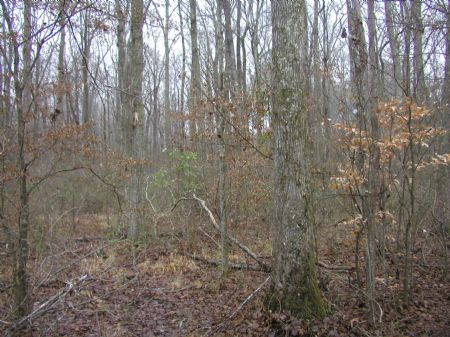 Poplar Branch Tract - 1152 Acres : Lexington : Henderson County : Tennessee