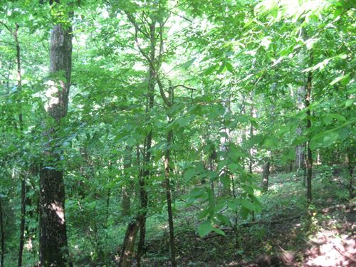 Beautiful Secluded Tract : Woodbury : Meriwether County : Georgia