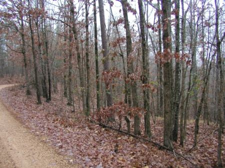 Cave Springs Road - 251 Acres : Henderson : Chester County : Tennessee