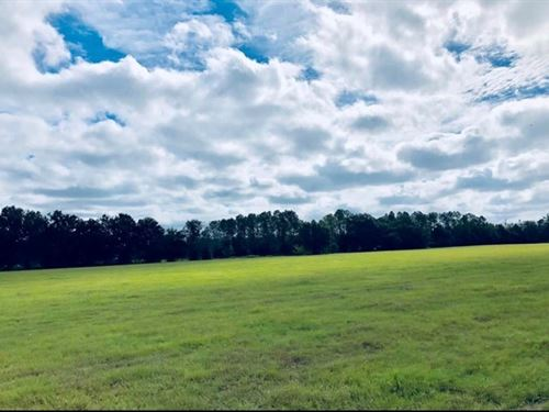 60 Acres, Trenton Florida Gilchrist : Trenton : Gilchrist County : Florida