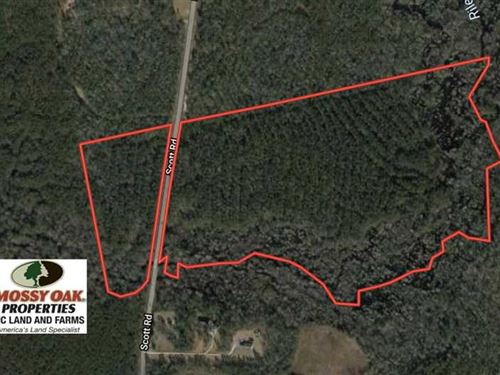 59 Acres of Hunting And Timber Lan : Rocky Point : Pender County : North Carolina