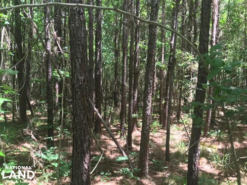 Coontail Road, Investment, Hunting : Aberdeen : Monroe County : Mississippi