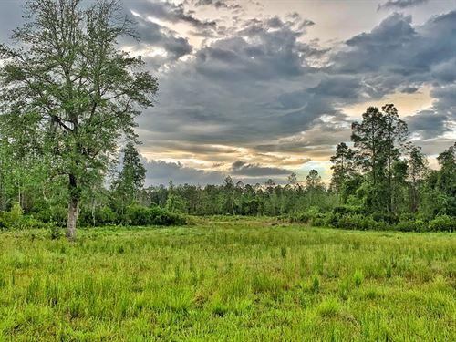 700+ Acres Hunting Land, Madison : Madison : Florida