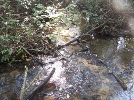 Cohelee Creek : Hilton : Early County : Georgia