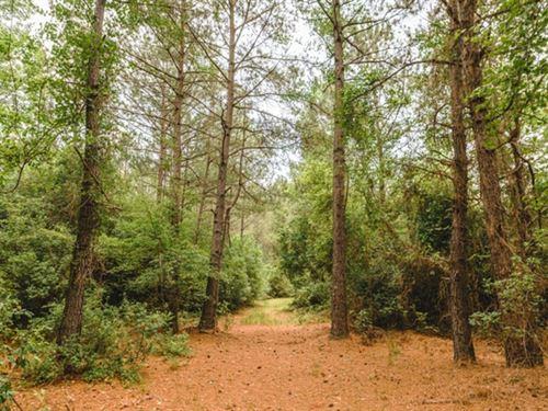 Gobbler Lane : Twin City : Emanuel County : Georgia
