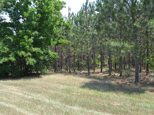 Burnham Pines : Eastman : Dodge County : Georgia