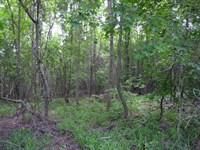 88 Acres Wooded, Owner Financing : Waynesboro : Burke County : Georgia