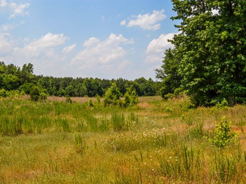26 Ac Hunting Tract In Union County : Union : South Carolina
