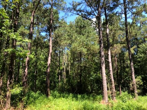 77 Wooded Acres In Npsd : Summit : Pike County : Mississippi