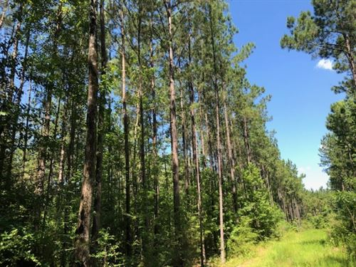 96 Wooded Acres In Npsd : Summit : Pike County : Mississippi
