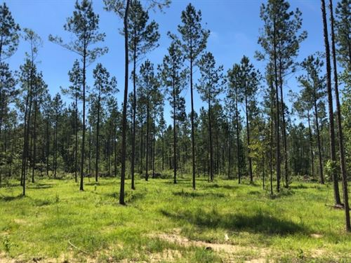 5.33 Acres In Npsd : Summit : Pike County : Mississippi