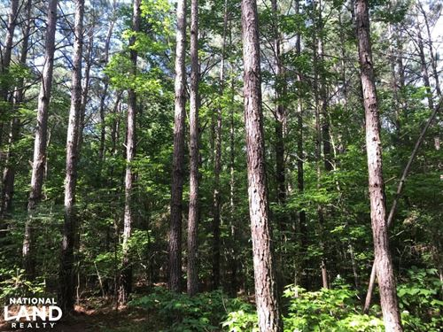 Timber, Investment, Hunting Opportu : Houston : Chickasaw County : Mississippi