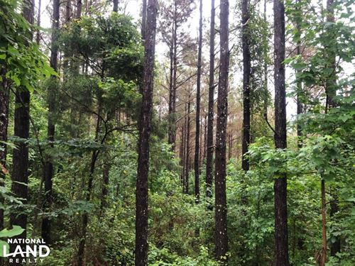 43 Itawamba Timber/Rec Tract : Tremont : Itawamba County : Mississippi
