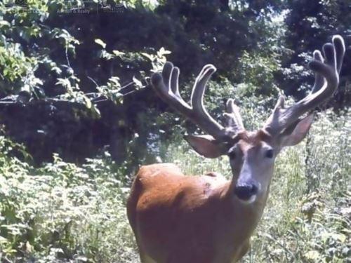 Top-Notch Hunting Land Monroe : Cashton : Monroe County : Wisconsin