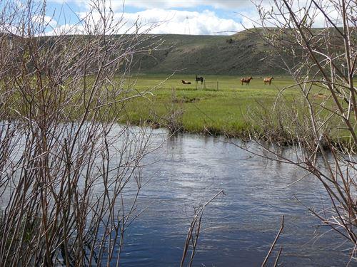 Endless Opportunity Parlin Darlin : Parlin : Gunnison County : Colorado