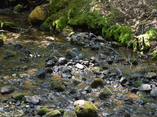 52 Acres Unrestricted Stream Ponds : Roaring Gap : Alleghany County : North Carolina