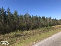 Future Income Producing Pine : Morton : Scott County : Mississippi