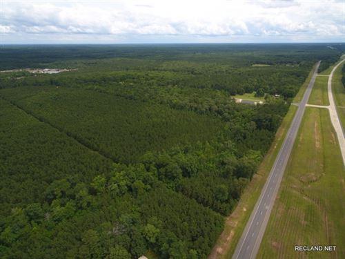 141 Ac, Pine Timberland & Recr : Lillie : Union Parish : Louisiana