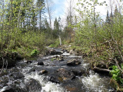 Sheridan Brook Woodland : Guildhall : Essex County : Vermont