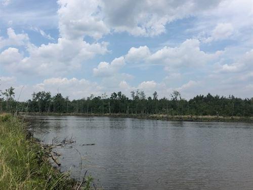 Starr Pond : Abbeville : Wilcox County : Georgia