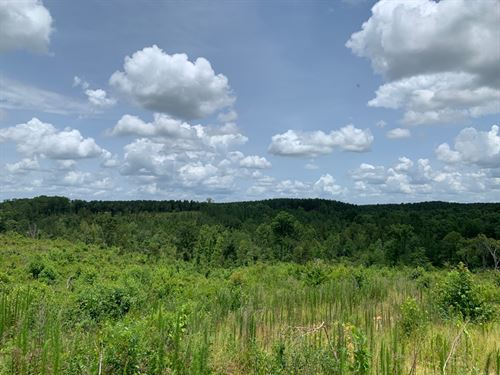 71 Acres +/- Fayette County, Al : Fayette : Alabama