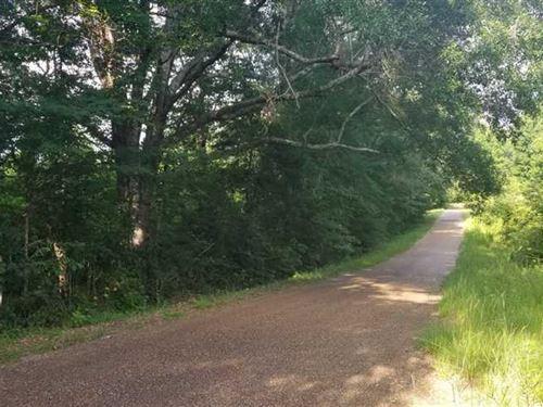 Brushy Creek Tract, Lasalle Parish : Olla : La Salle Parish : Louisiana