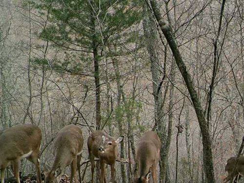 Reduced 40 Acres of Hill Country : Omaha : Boone County : Arkansas