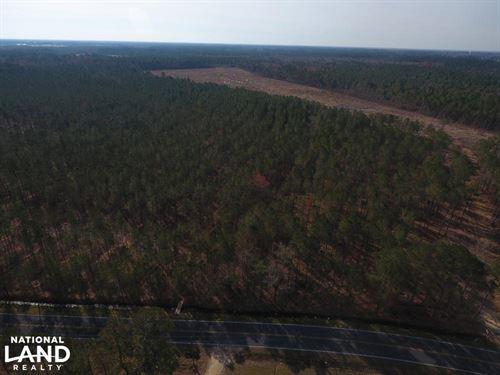Dawson's Station Timber Tract : Kinston : Lenoir County : North Carolina