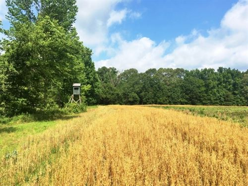 Hunting Land For Sale Hardwoods &Am : Hermanville : Claiborne County : Mississippi