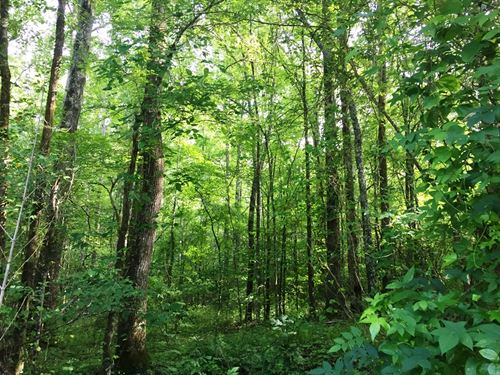 Walnut North Tract : Pocahontas : McNairy County : Tennessee