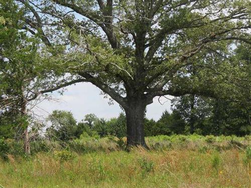 Panoramic Recreational Hunting : Crystal : Atoka County : Oklahoma