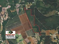 460 Acres of Timber Land For Sale : Nakina : Columbus County : North Carolina