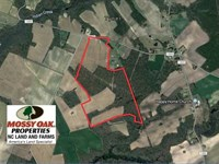 132 Acres of Farm And Timber Land : Tyner : Chowan County : North Carolina