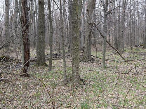 Land For Sale 32.2 Acres : Republic : Seneca County : Ohio