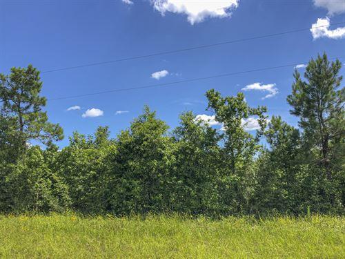 67 Acres Caney Estates 311029 : Chester : Polk County : Texas