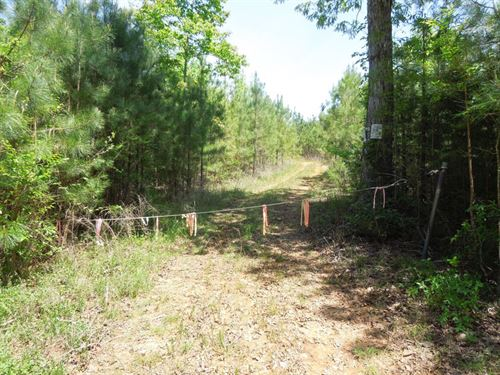 Hunting/Timber/Recreational Tract : Mount Gilead : Montgomery County : North Carolina
