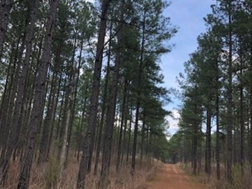 Little Cedar Creek Hunting Preserve : Haddock : Jones County : Georgia