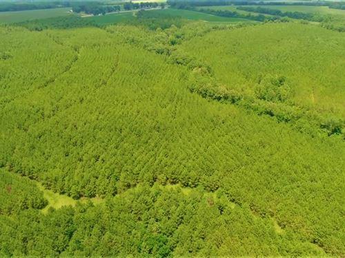 Richland Hunting Plantation : Richland : Webster County : Georgia