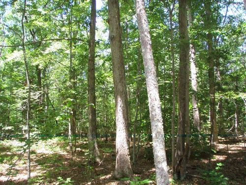 Nice Wooded Tract : Kenbridge : Lunenburg County : Virginia