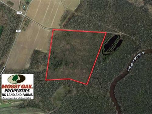 Reduced, 37 Acres of Prime Bear : Columbia : Tyrrell County : North Carolina
